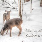 Holiday Whitetail Deer Card - Snowy Woods by MotherNature2
