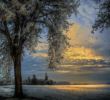 The Blue Hour ~ Snow ~ by Charles & Patricia   Harkins ~ Picture Oregon
