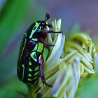 The Green Bug by lib225