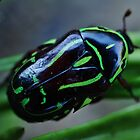 Green Bug by lib225