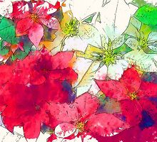 Mixed color Poinsettias 1 Serene by Christopher Johnson
