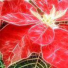 Mottled Red Poinsettia 1 Ephemeral Angelic by Christopher Johnson