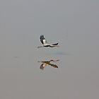 Great Blue Heron in Fog by Denise Worden