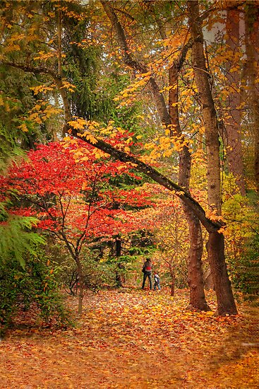 Autumn Walk by Diane Schuster