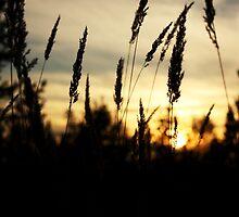 Autumn Sunset by Lina Ottosson