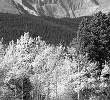 Longs Peak Autumn Scenic BW View by Bo Insogna