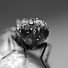 After The Rain (b/w) by saseoche
