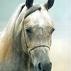 Arabian Horse Portrait by Oldetimemercan