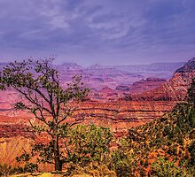 Grand Canyon, AZ, USA by LudaNayvelt