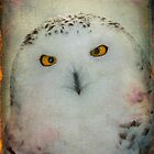 Finer feathered friends: Snowy Owl by alan shapiro