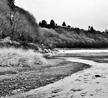 Carkeek Park Beach Landscape by Ian Phares