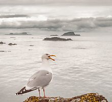 Gull by maxblack