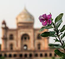 Mughal Flower by MANAS RANJAN SAHOO