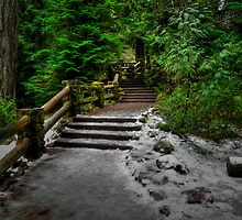 Ice On The Path ` Sahalie Falls McKenzie River ~ by Charles & Patricia   Harkins ~ Picture Oregon