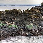 Grey seals on Inchcolm by Tom Gomez