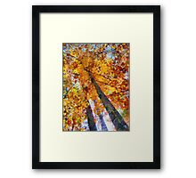 Autumn Trees In The Sky Framed Print