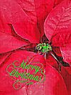 Christmas Passion - greeting card by Scott Mitchell