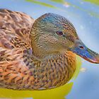 duck portrait by terezadelpilar~ art & architecture