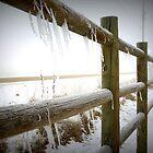 Freezing Fenceline by trueblvr