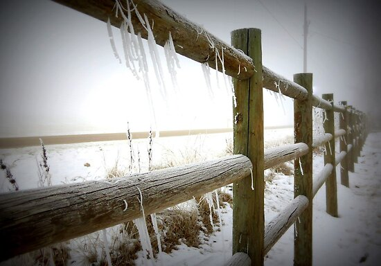 Freezing Fenceline by trueblvr