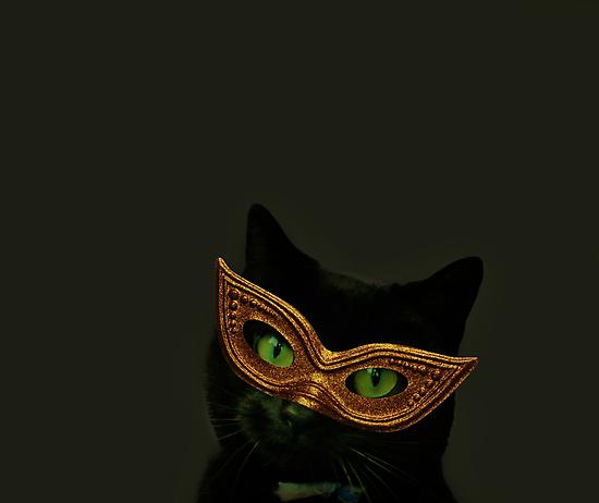 Cat Class by Ladymoose