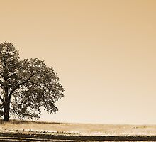 Oak on the hill by creativedesignz