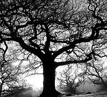 Spooky tree in black and white by shootingnelly