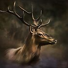 Deer. by andy551
