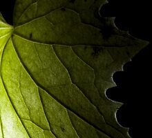 Macro leaf close up against the light green black decoration - La fata dietro la foglia by visionitaliane