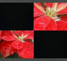 Mottled Red Poinsettia 1 Ephemeral Blank Q2F0 by Christopher Johnson