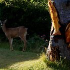 Deer Tree by Patricia  Butler