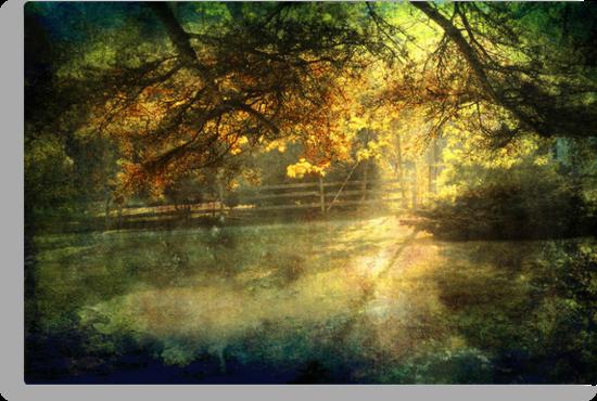 Autumn Light by Ellen Cotton