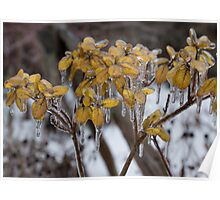 Ice Storm 2013 - My Garden in the Morning  Poster