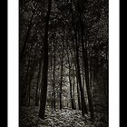 Alternative Forest I by hankfrentzphoto