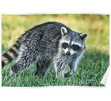 Raccoon Buddy Poster