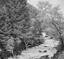 Boulder Creek Winter Wonderland Black and White by Bo Insogna