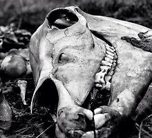 Skull by BazMan29
