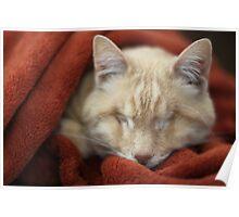 Gumbo in Blanket Poster