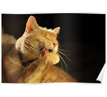Gumbo Licking Paw Poster