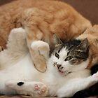 Gumbo Tackling Vidalia by wee3beasties