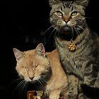 Gumbo & Mr. Grigsby by wee3beasties