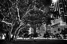 City Tree by njordphoto