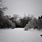 Ice storm by lumiwa