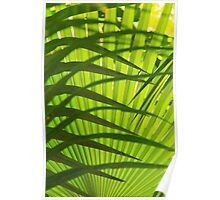 Palm Frond Layers  Poster