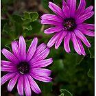 purple flower power by Martin Pot