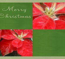 Mottled Red Poinsettia 1 Ephemeral Merry Christmas Q5F1 by Christopher Johnson