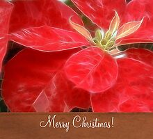 Mottled Red Poinsettia 1 Ephemeral Merry Christmas S1F1 by Christopher Johnson