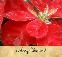 Mottled Red Poinsettia 1 Ephemeral Merry Christmas S2F1 by Christopher Johnson
