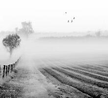 The Field by shuttersuze75