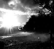 Sprinklers at dusk... by DJD79
